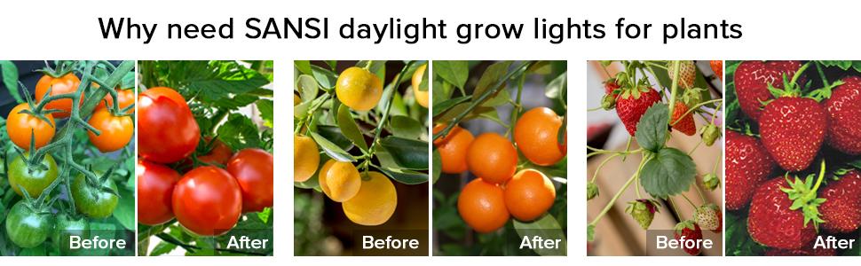 LED växtglödlampa för inomhusväxter helspektrum växtlampor LED växtlampa E27 skruv
