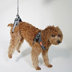 The harness could be used separately without the wheelchair