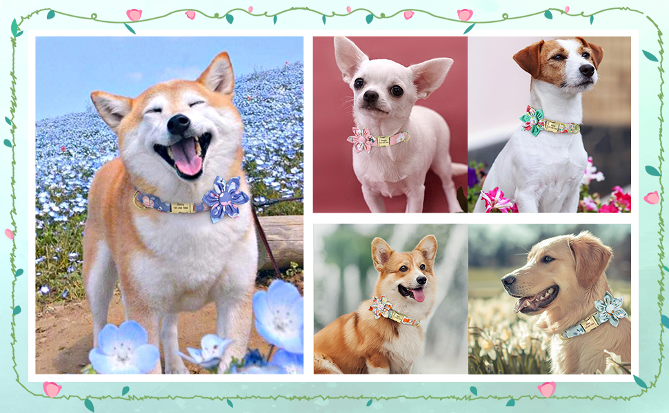 beautiful floral dog collar for small medium large dogs