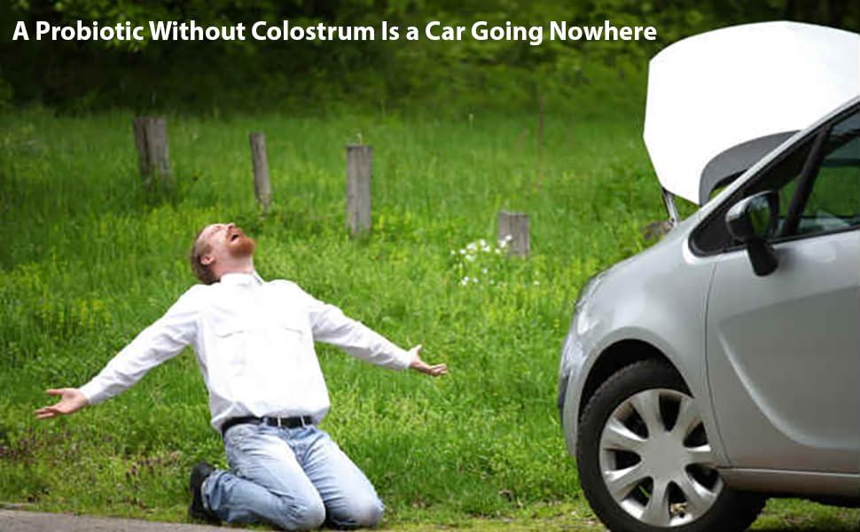no colostrum no movement