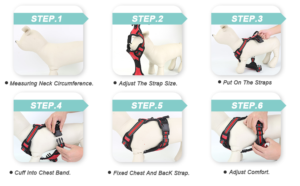 pet correct found active area small plates neck belt easy from 6 months