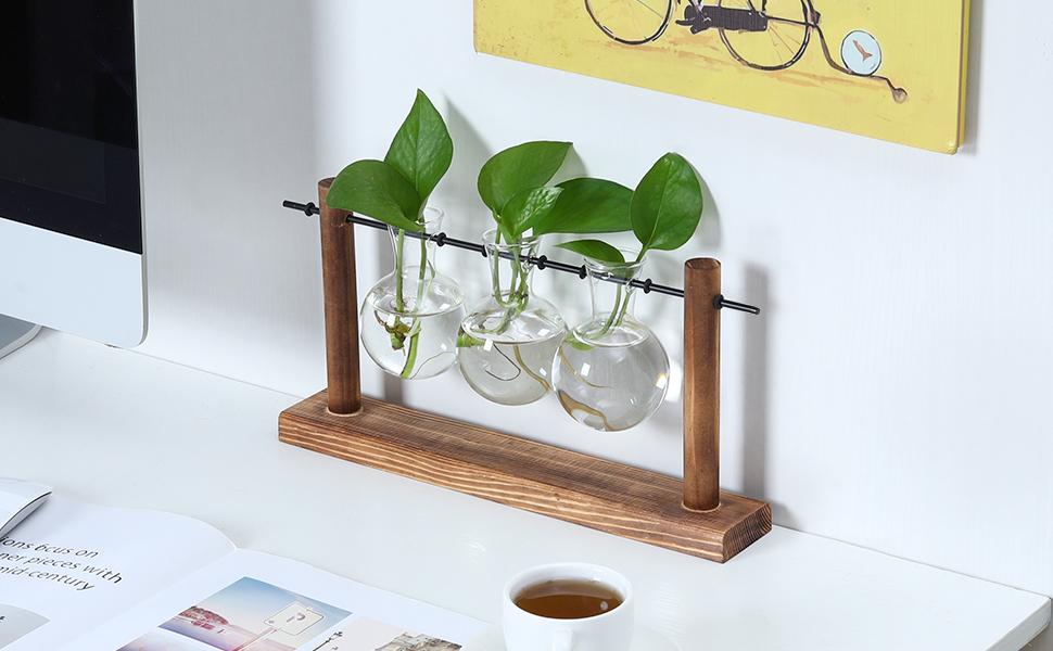 maintenance free terrarium tabletop terrarium house plants indoors live air plant holders table