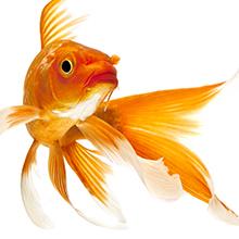 marine collagen safe for dry sensitive skin vitamin a b c d e b12 biotin dead sea