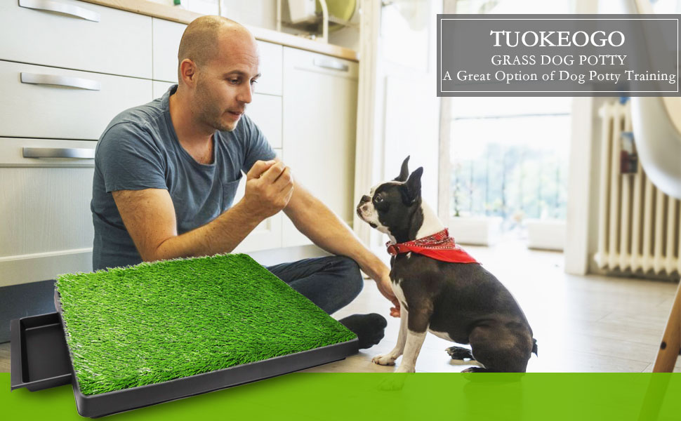 puppy grass pee pad with tray large