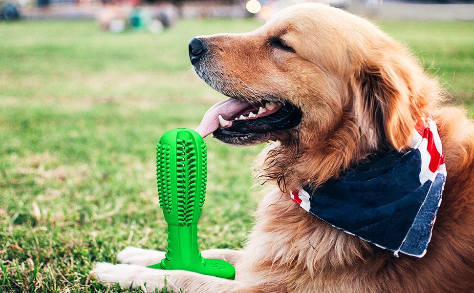 dog toothbrush1
