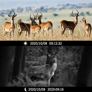 wildlife camera with night vision