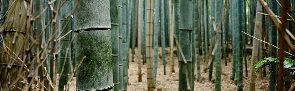 Warum Bambus?