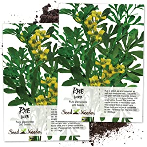 rue seeds for planting
