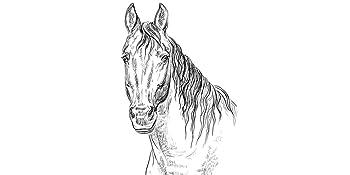 100% Pferd pur 6x820g Pferdefleisch und wertvollen Innereien