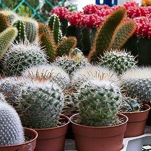 wonder-soil-coco-coir-cactus-succulent