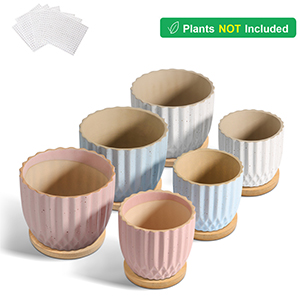 pot for plant