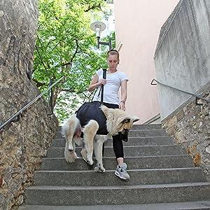 Nature Pet Ganzkörper Tragehilfe Für Hunde Durchgehende Tragehilfe Durchgehende Hebehilfe Für Hunde M Schwarz Haustier