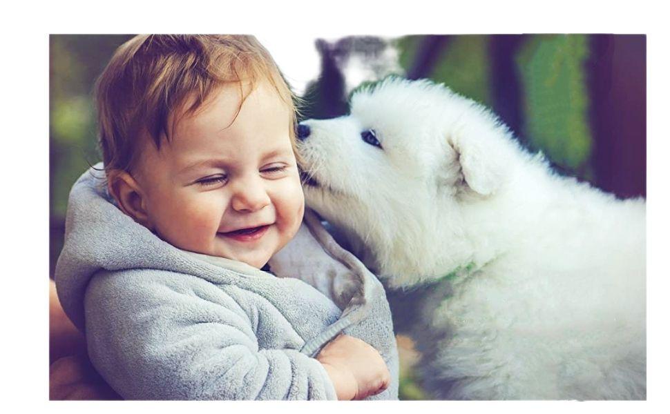 DOG PUPPY LOVE