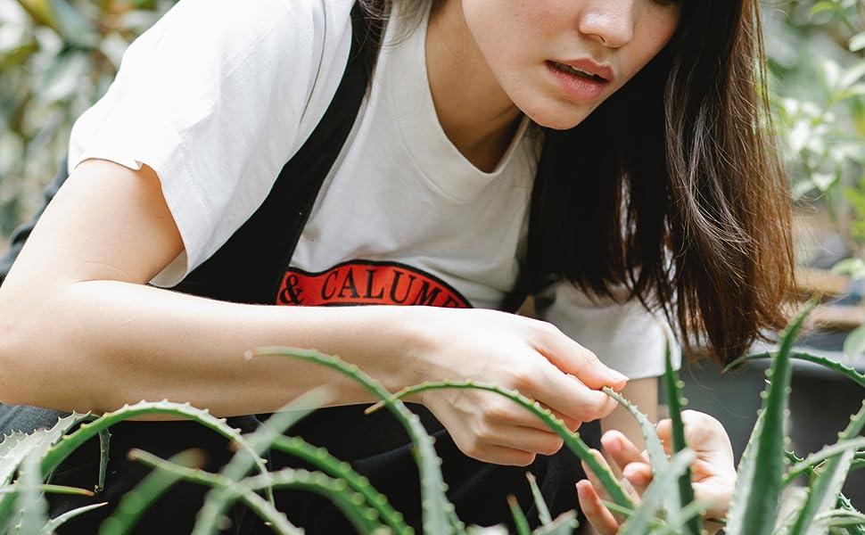 Succulent and Cactus Bonsai DIY Rocks