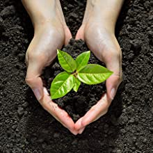 Hands holding dirt and a seedling