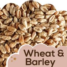 Wheat & Barley: