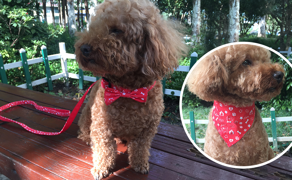 dog collar leash scarf