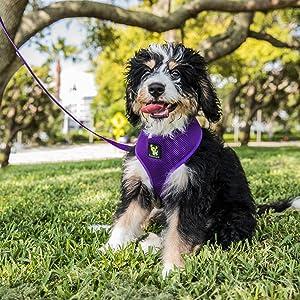 Large Purple Dog Harness