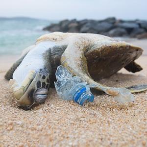 Plastic Product Kill Animals