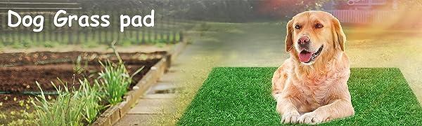 dog artificial grass