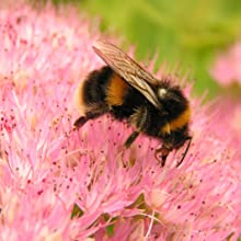 Bee follows scent trail to flower