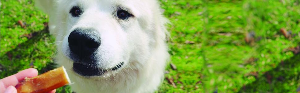 Redbarn Pet Products Mini Bully Sticks Shapes Natural Single Ingredient Dog Chew Treats Chews Treats