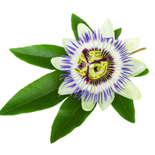 benefits of passion flowers for dogs