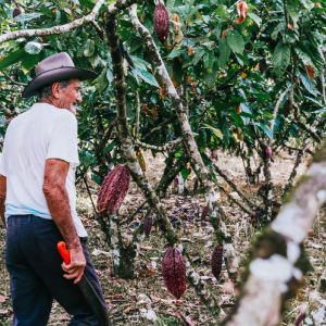 Sustainable Cocoa Sourcing