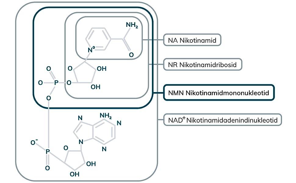Nicotinamid Mononukleotida - 10 gramos - 100% Uthever® NMN - probado en Alemania - MoleQlar®