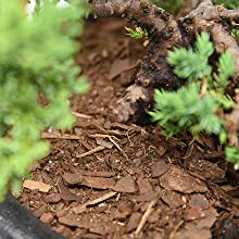 Bonsai tree shrub liquid fertilizer plant food