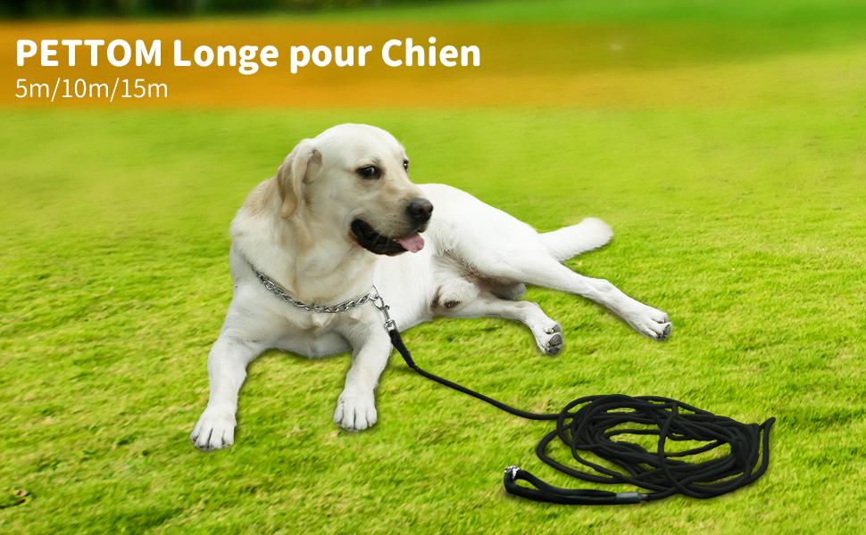 longe pour chien corde