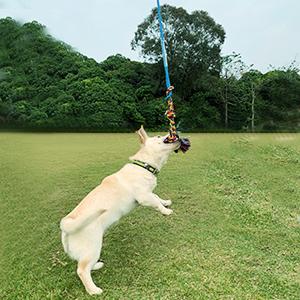 flirt pole for pets