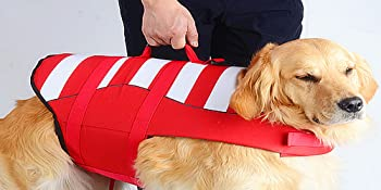 dog life vests for swimming