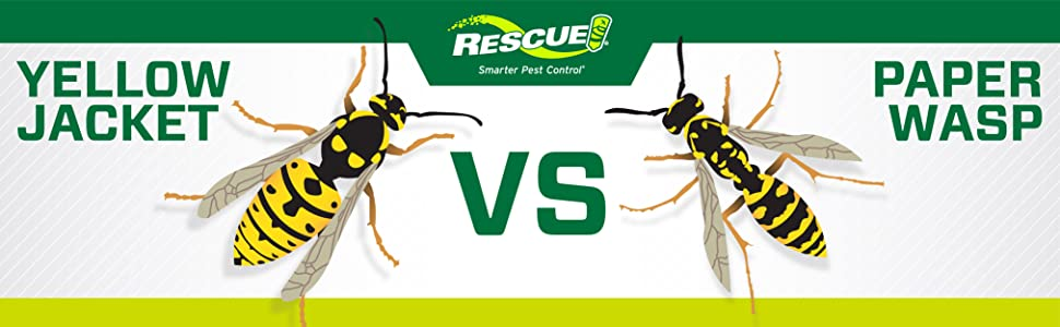 Yellowjacket vs Paper Wasp