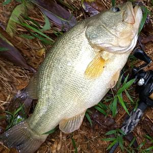bass jig fishing gear bass fishing