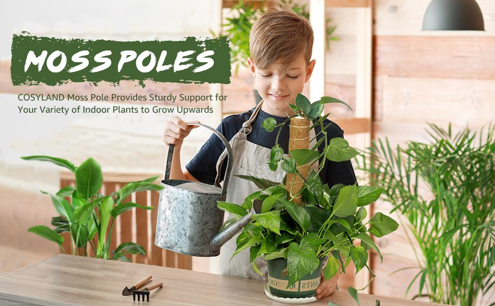 Train your plants to grow upwards