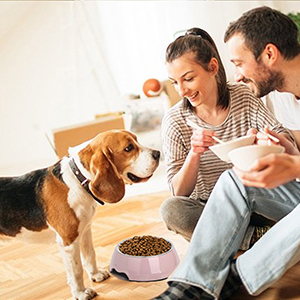 Stainless Steel Dog Bowl with Rubber Base for Small/Medium/Large Dogs, Pets Feeder Bowl and Water