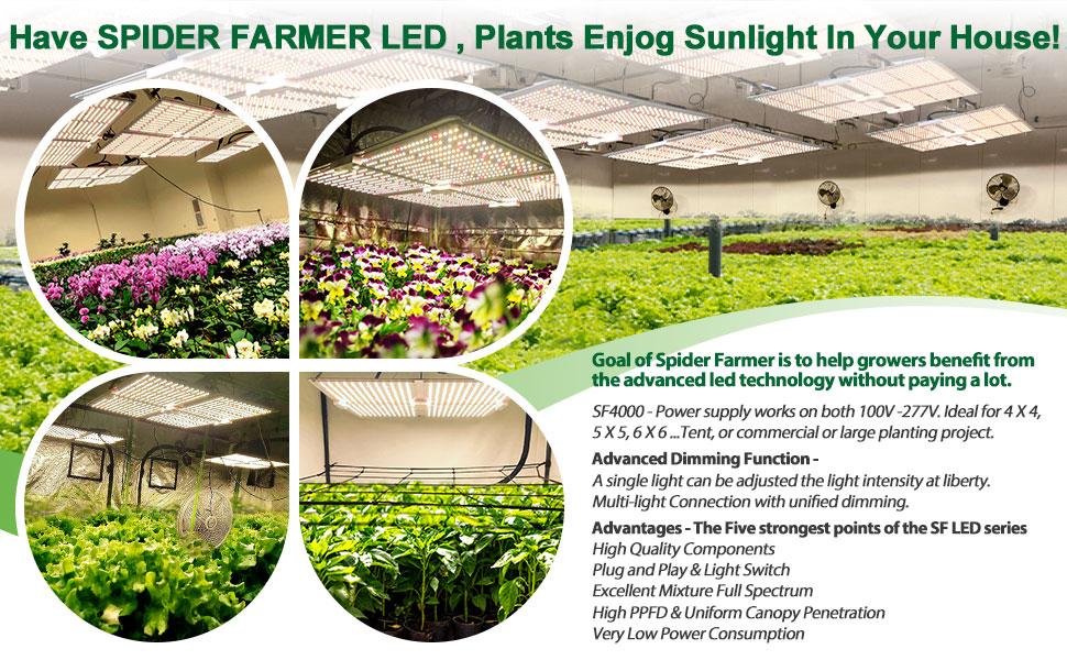 hydroponic lighting bloom viperspectra hps phlizon greenhouse spider farmer quantum board likesuns