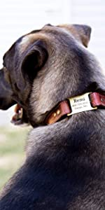 Personalized English Bridle Leather Collar - Custom, Engraved, North American Leather, Adjustable