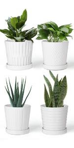 Succulent Plant Pots (Click Here)
