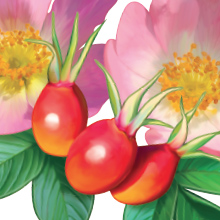 Solaray Vitamin C 1000 mg with Rose Hips & Acerola Long Lasting Healthy Immune & Antioxidant Support