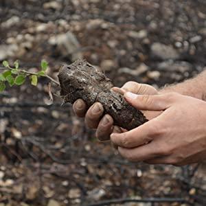 Eco glitter,  cosmetic glitter, vegan glitter, planting trees