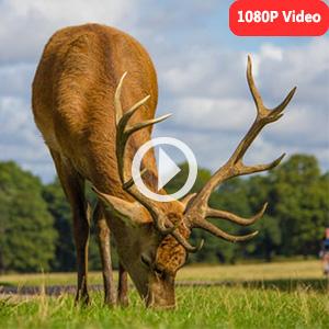 1080P H.264 Video