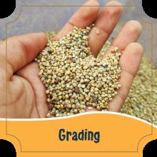 Grading - Millets