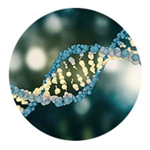 stem cells, plant, skincare