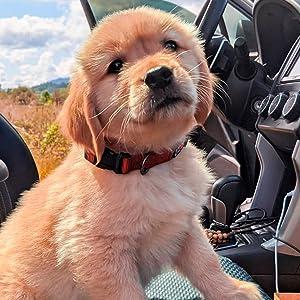 Collier pour chien, harnais pour chien, laisse pour chien, harnais pour animaux, collier pour chiot