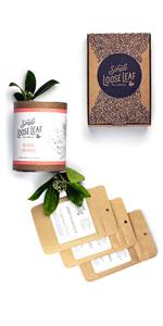 simple loose leaf tea company monthly subscription tea box
