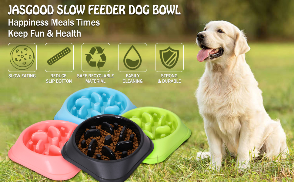 slow eat dog bowl