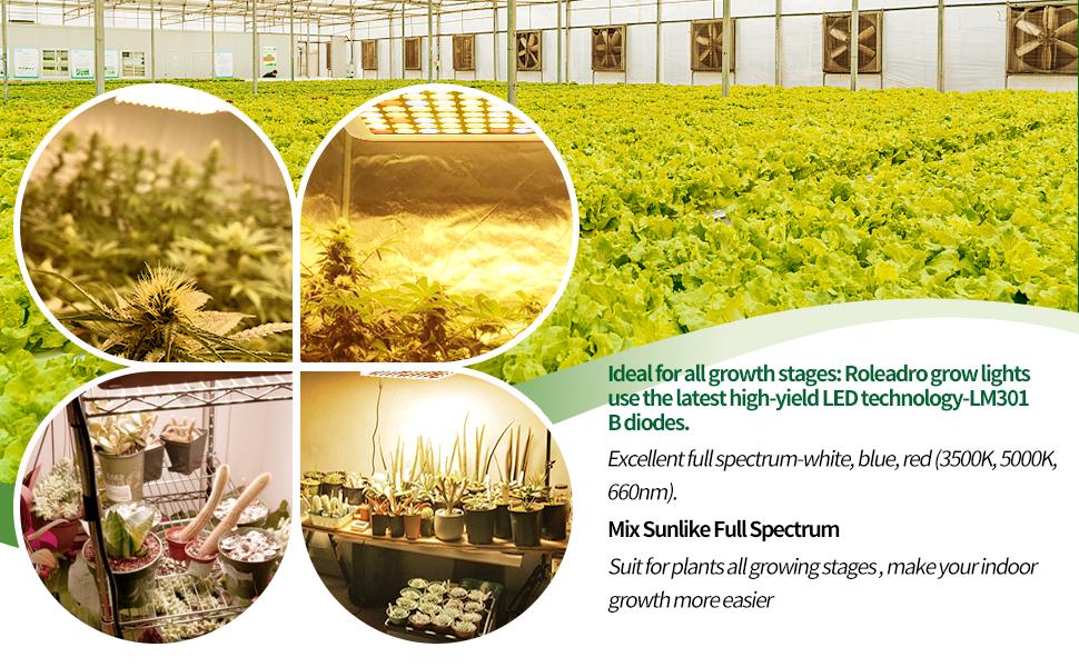 Grow Lights for Indoor Plants Full Spectrum