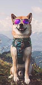 dog harnesses, dog harness no pull, easy walk harness, harness for dogs, dog harness for large dogs
